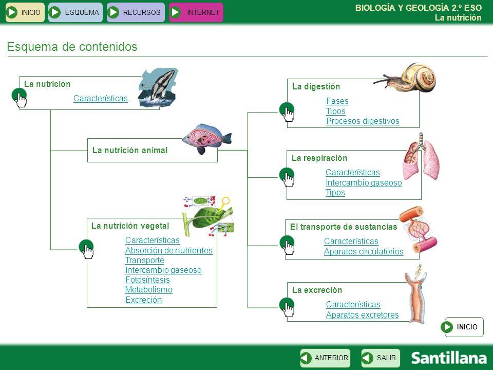 BIOLOGÍA Y GEOLOGÍA 2.º ESO La nutrición Esquema de contenidos La nutrición Características INICIOESQUEMARECURSOSINTERNET La digestión Fases Tipos Pro