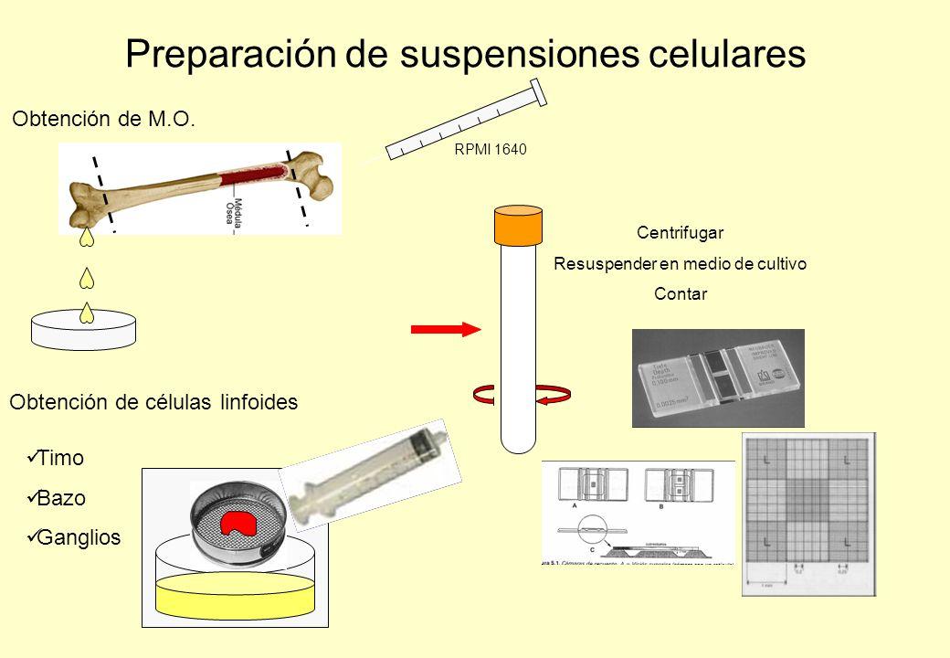 Preparación de suspensiones celulares Obtención de M.O. RPMI 1640 Obtención de células linfoides Centrifugar Resuspender en medio de cultivo Contar Ti