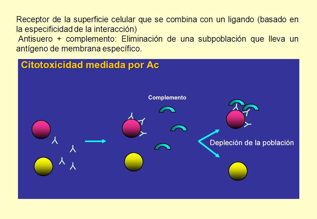 Receptor de la superficie celular que se combina con un ligando (basado en la especificidad de la interacción) Antisuero + complemento: Eliminación de una subpoblación que lleva un antígeno de membrana específico.