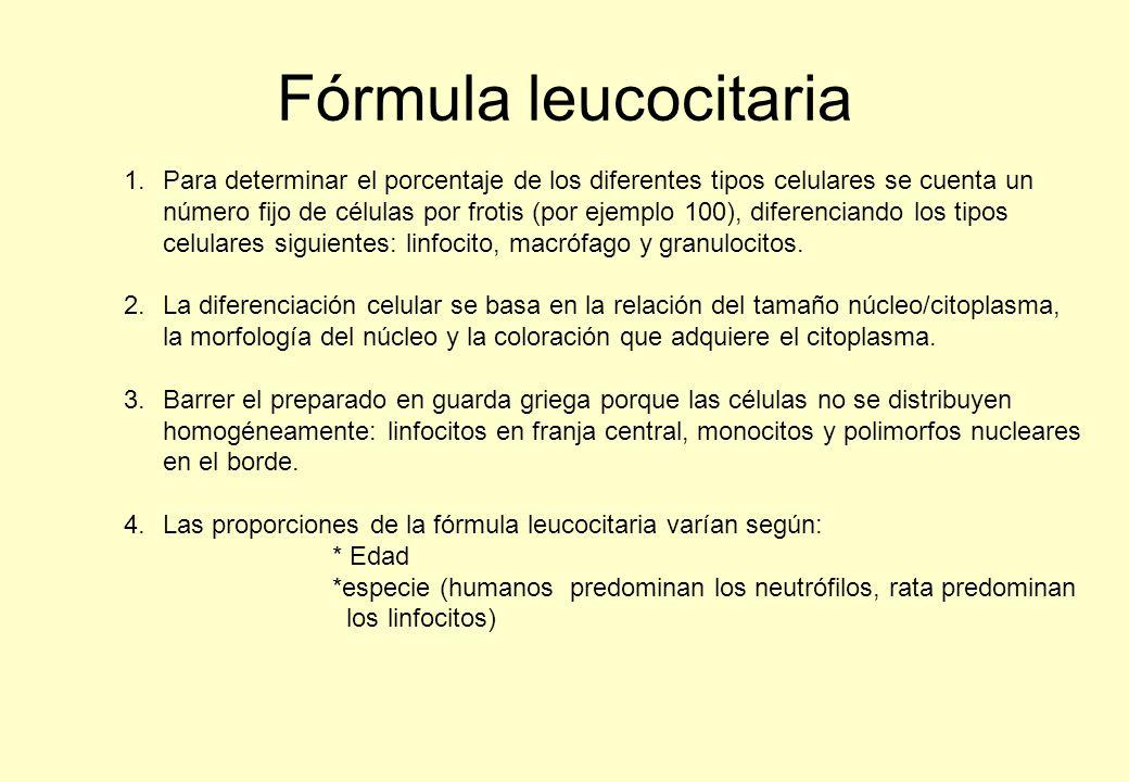 Fórmula leucocitaria 1.Para determinar el porcentaje de los diferentes tipos celulares se cuenta un número fijo de células por frotis (por ejemplo 100), diferenciando los tipos celulares siguientes: linfocito, macrófago y granulocitos.