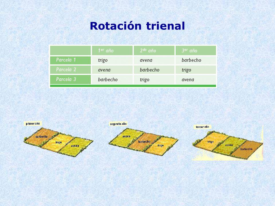 Rotación trienal