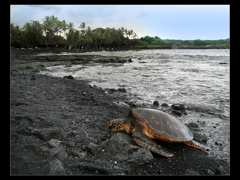 Punaluu es una playa entre Pahala y Na Alehu, en Hawaii.