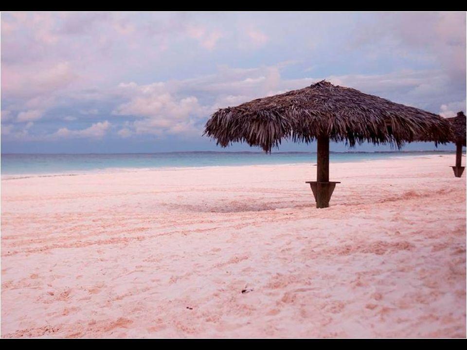 Pink Sand Coral Beach es una playa entre palmeras y arena rosada en la isla de Harbour, en Bahamas.