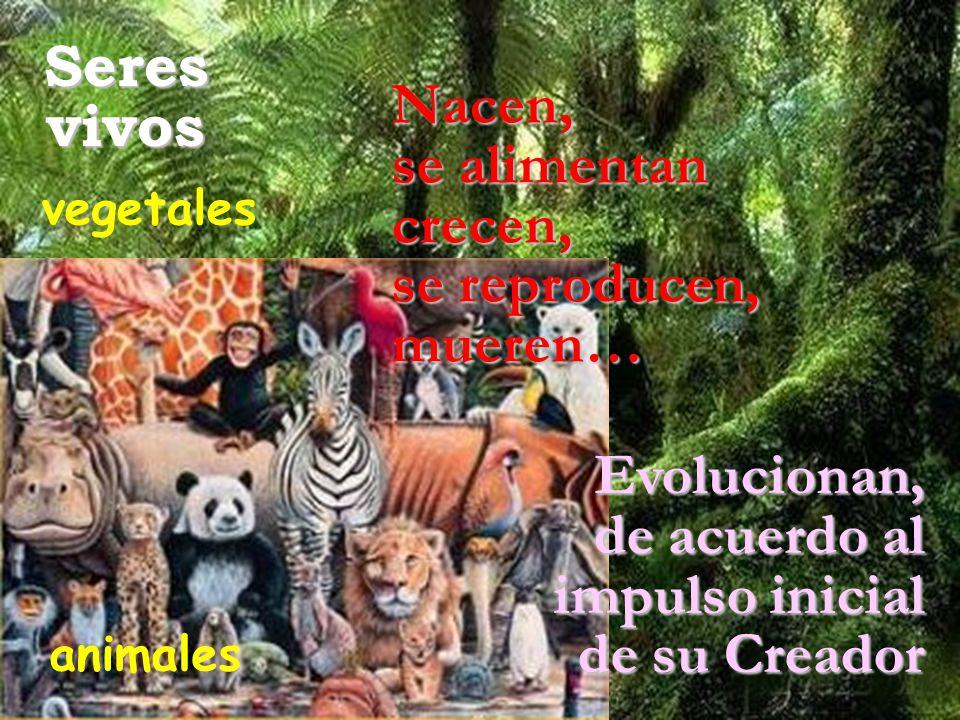 Seresvivos Nacen, se alimentan crecen, se reproducen, mueren… Evolucionan, de acuerdo al impulso inicial de su Creador vegetales animales