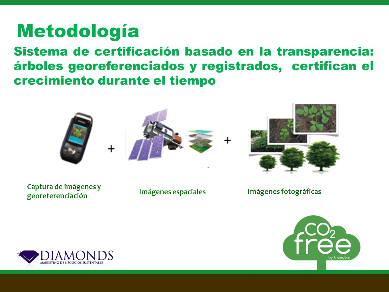 Metodología Sistema de certificación basado en la transparencia: árboles georeferenciados y registrados, certifican el crecimiento durante el tiempo Imágenes espaciales Imágenes fotográficas Captura de imágenes y georeferenciación