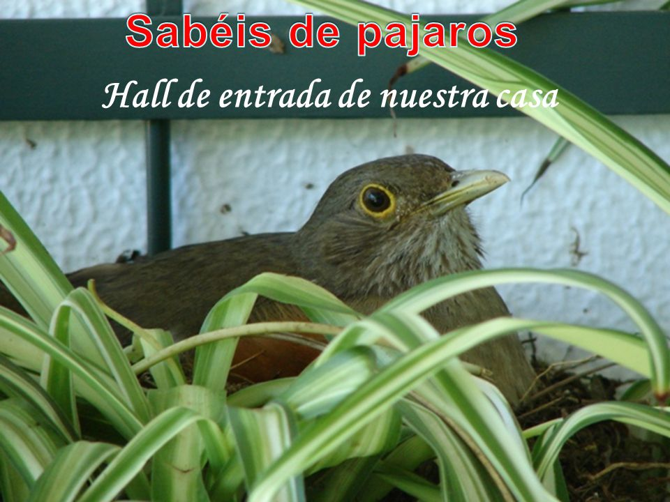 www.vitanoblepowerpoints.net Tranquilos...