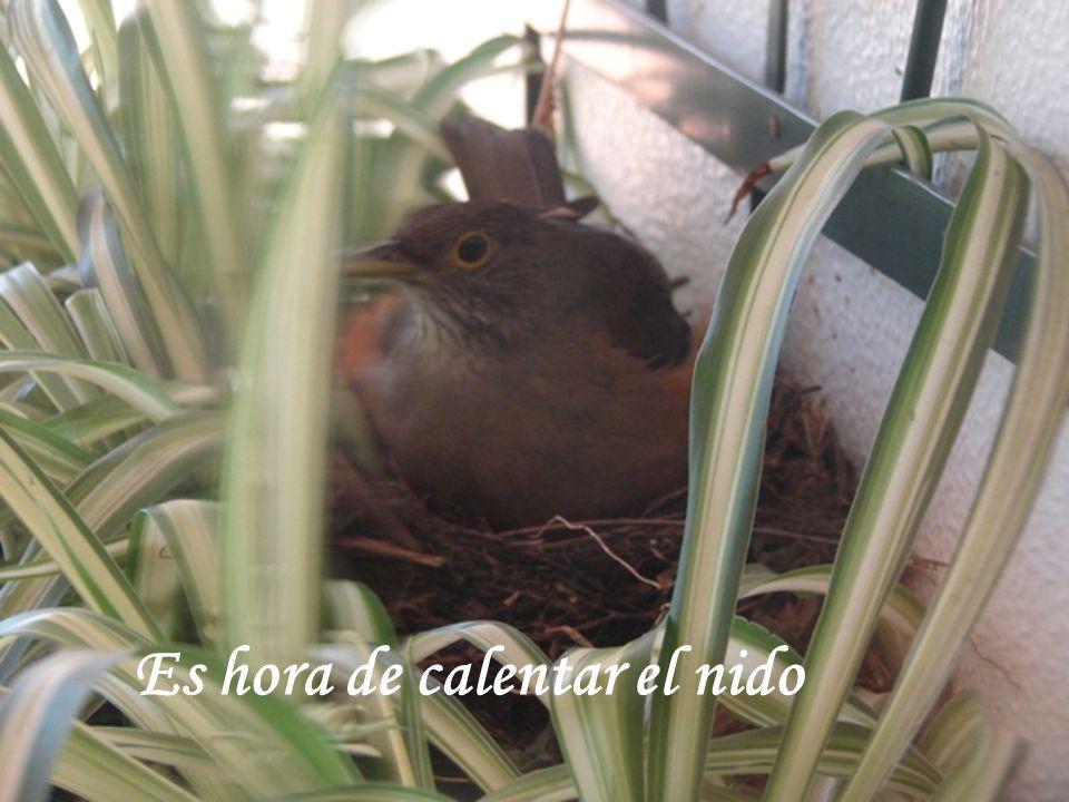 www.vitanoblepowerpoints.net Es hora de calentar el nido