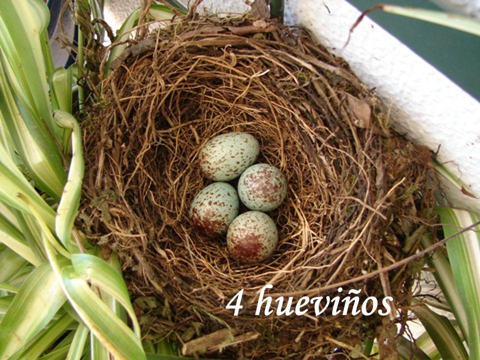 www.vitanoblepowerpoints.net Y no les inhibir afecto