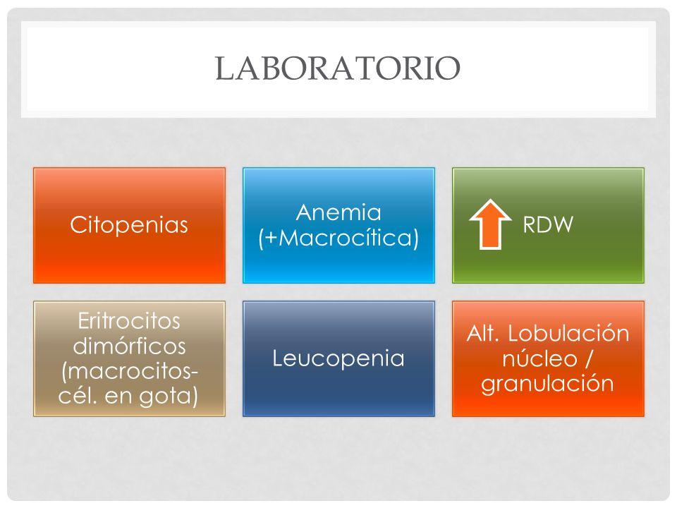 LABORATORIO Citopenias Anemia (+Macrocítica) RDW Eritrocitos dimórficos (macrocitos- cél.
