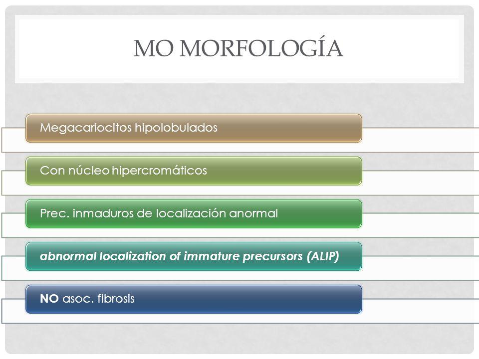 MO MORFOLOGÍA Megacariocitos hipolobuladosCon núcleo hipercromáticosPrec.