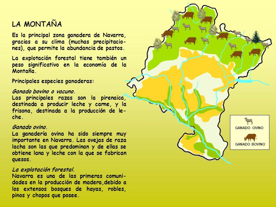 GANADO OVINO GANADO BOVINO LA MONTAÑA Es la principal zona ganadera de Navarra, gracias a su clima (muchas precipitacio- nes), que permite la abundancia de pastos.