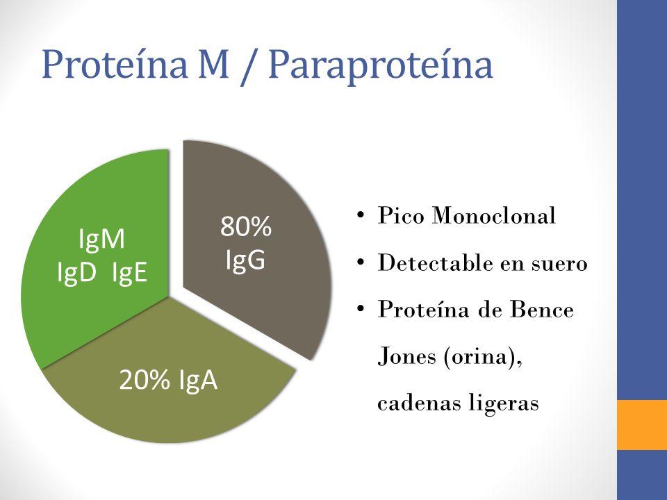 Proteína M / Paraproteína 80% IgG 20% IgA IgM IgD IgE Pico Monoclonal Detectable en suero Proteína de Bence Jones (orina), cadenas ligeras