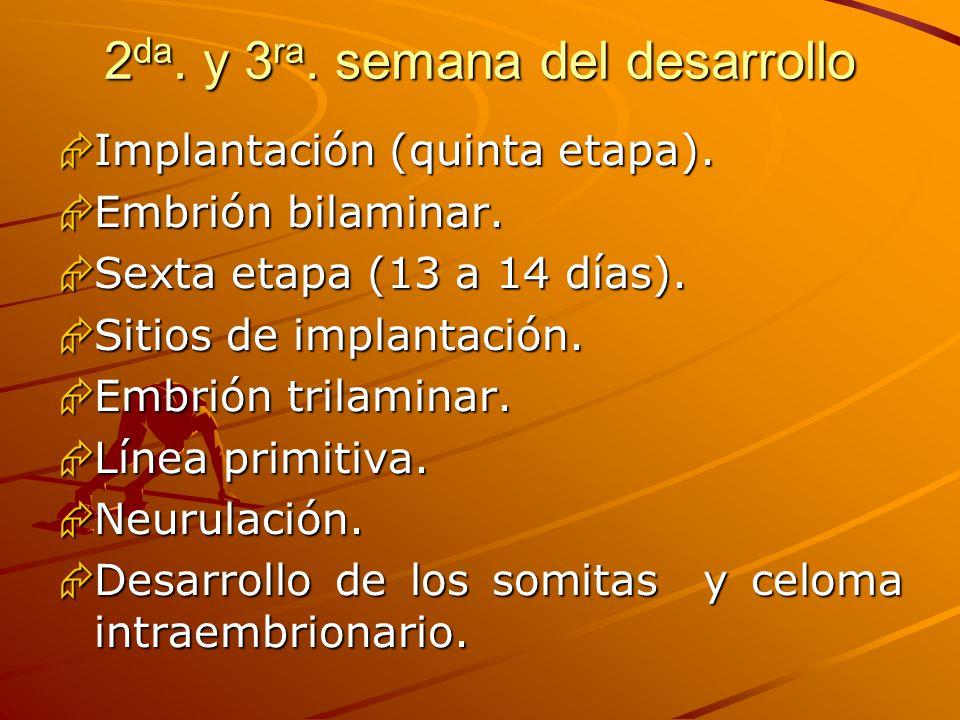 2 da. y 3 ra. semana del desarrollo Implantación (quinta etapa). Implantación (quinta etapa). Embrión bilaminar. Embrión bilaminar. Sexta etapa (13 a