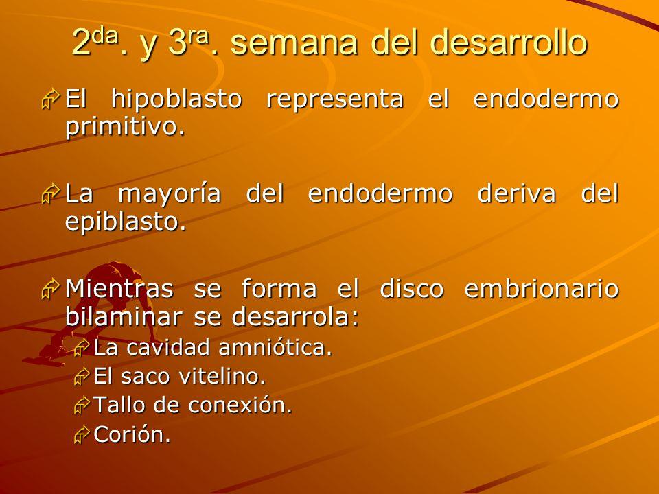 2 da. y 3 ra. semana del desarrollo El hipoblasto representa el endodermo primitivo. El hipoblasto representa el endodermo primitivo. La mayoría del e