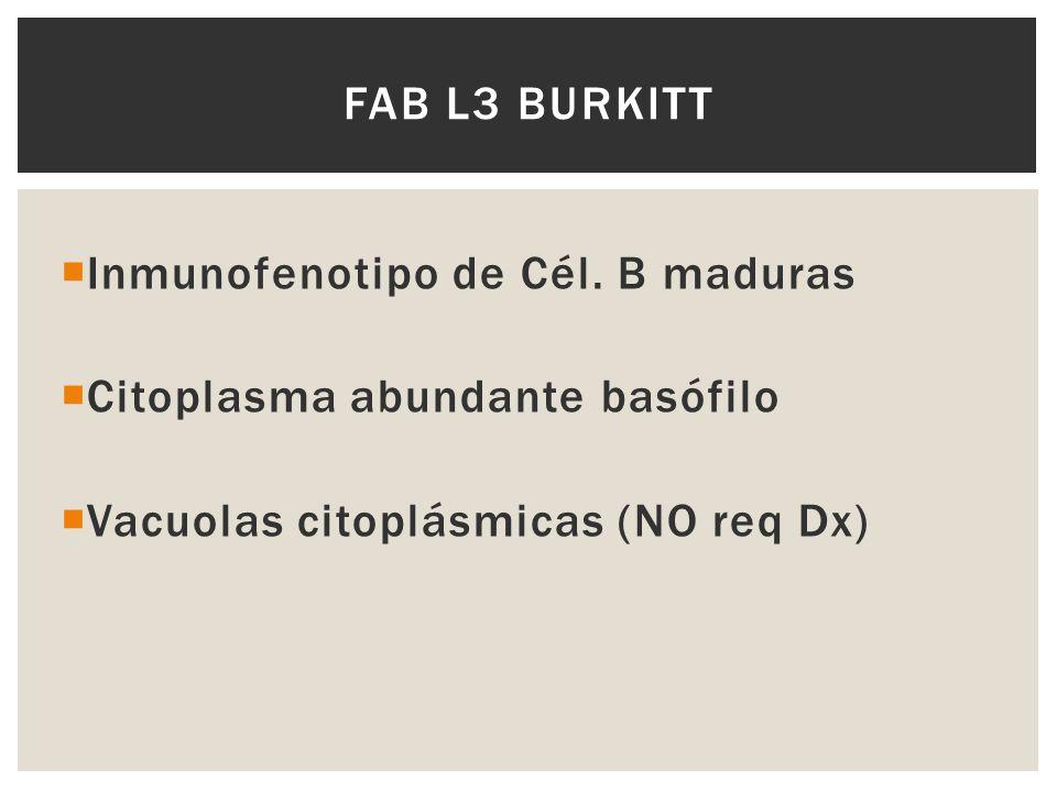 FAB L3 BURKITT Inmunofenotipo de Cél. B maduras Citoplasma abundante basófilo Vacuolas citoplásmicas (NO req Dx)