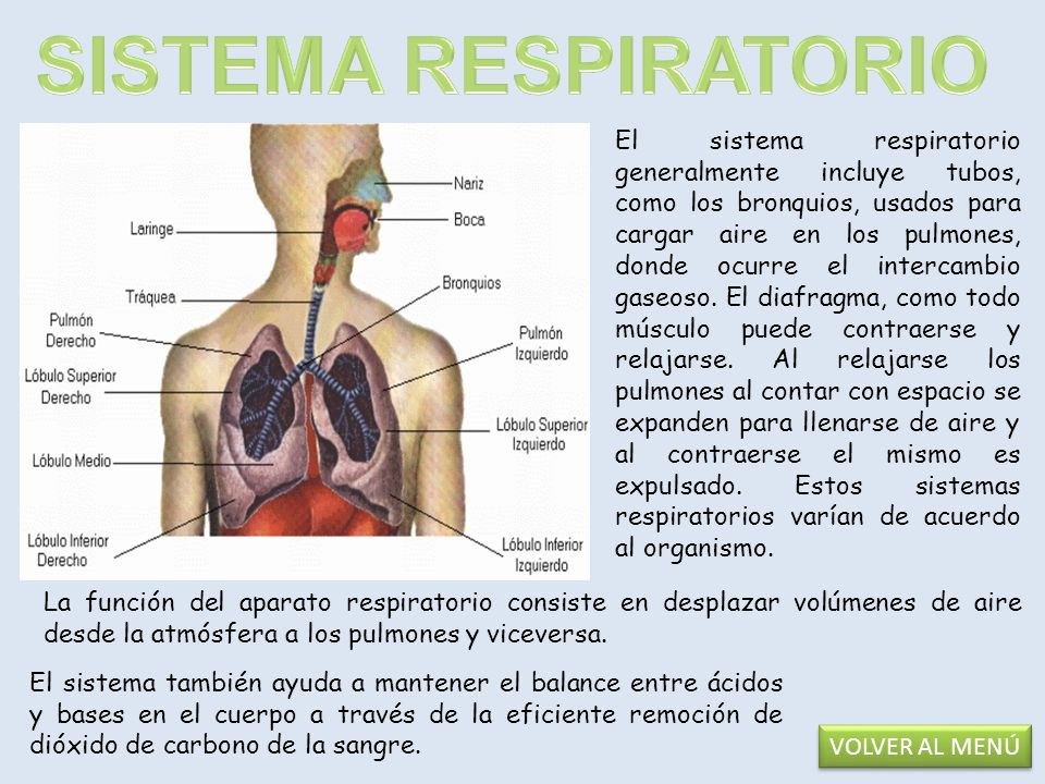 El aparato digestivo es el conjunto de órganos (boca, faringe, esófago, intestino delgado e intestino grueso ) encargados de la digestión, es decir, la transformación de los alimentos para que puedan ser absorbidos y utilizados por las células del organismo.