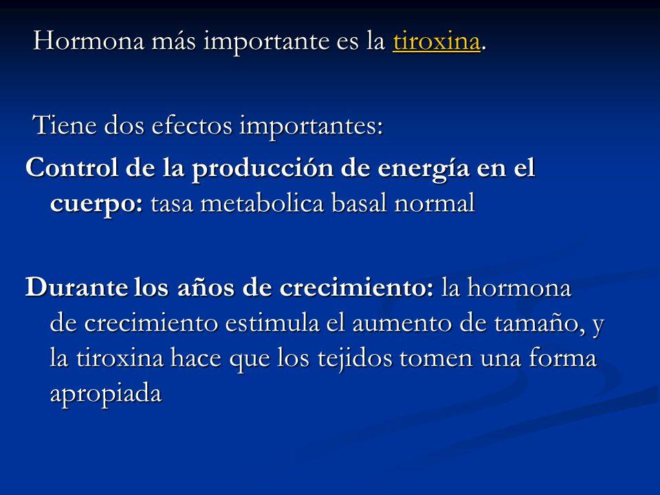 Hormona más importante es la tiroxina. Hormona más importante es la tiroxina.tiroxina Tiene dos efectos importantes: Tiene dos efectos importantes: Co