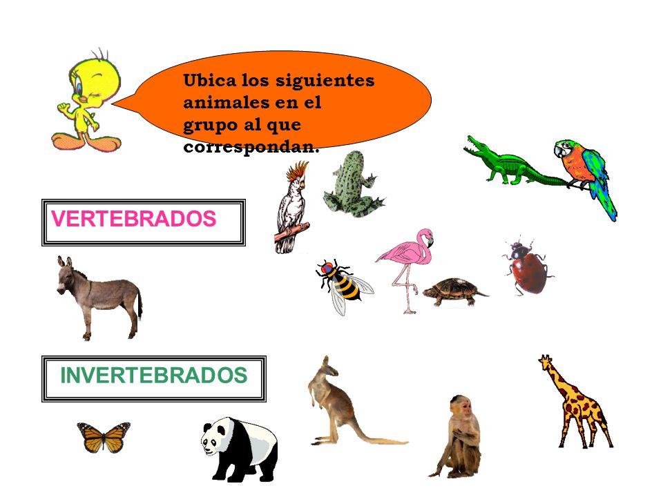 Ubica los siguientes animales en el grupo al que correspondan. VERTEBRADOS INVERTEBRADOS