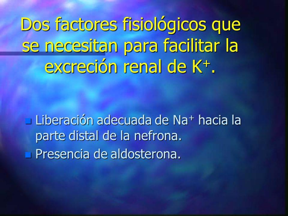 Dos factores fisiológicos que se necesitan para facilitar la excreción renal de K +. n Liberación adecuada de Na + hacia la parte distal de la nefrona