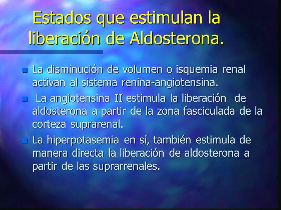 Estados que estimulan la liberación de Aldosterona. n La disminución de volumen o isquemia renal activan al sistema renina-angiotensina. n La angioten