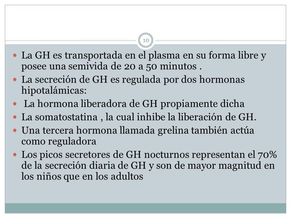La GH es transportada en el plasma en su forma libre y posee una semivida de 20 a 50 minutos. La secreción de GH es regulada por dos hormonas hipotalá
