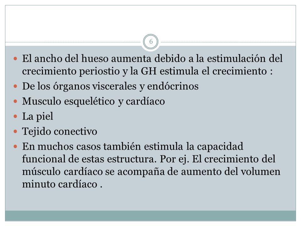 El ancho del hueso aumenta debido a la estimulación del crecimiento periostio y la GH estimula el crecimiento : De los órganos viscerales y endócrinos