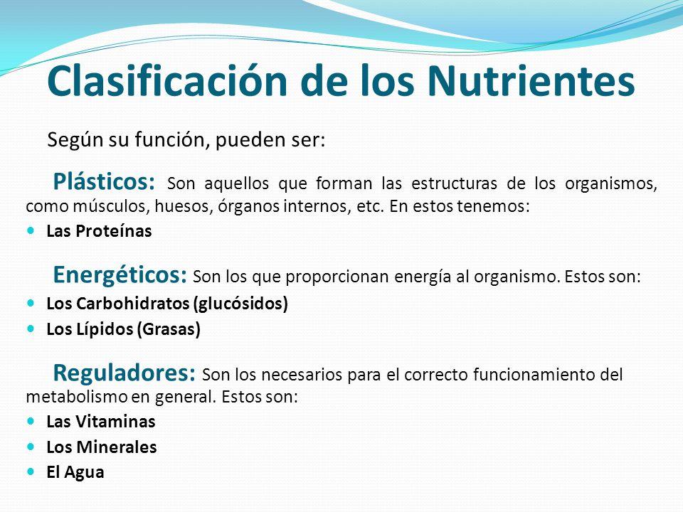 Clasificación de los Nutrientes Plásticos: Son aquellos que forman las estructuras de los organismos, como músculos, huesos, órganos internos, etc. En