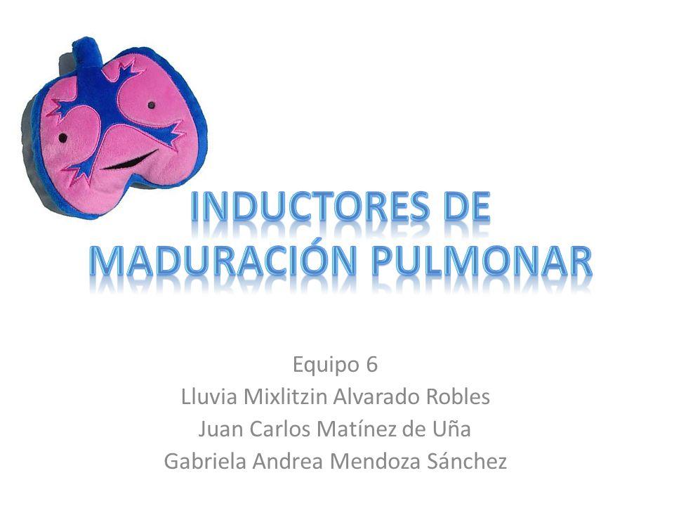 Equipo 6 Lluvia Mixlitzin Alvarado Robles Juan Carlos Matínez de Uña Gabriela Andrea Mendoza Sánchez