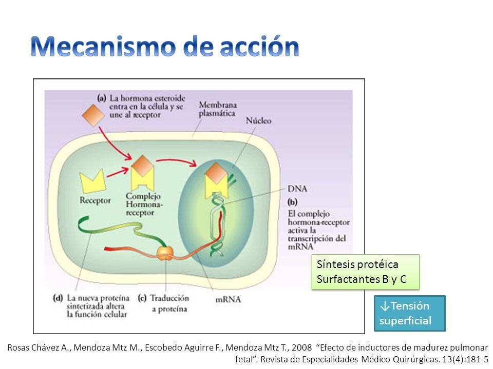Síntesis protéica Surfactantes B y C Tensión superficial Rosas Chávez A., Mendoza Mtz M., Escobedo Aguirre F., Mendoza Mtz T., 2008 Efecto de inductores de madurez pulmonar fetal.