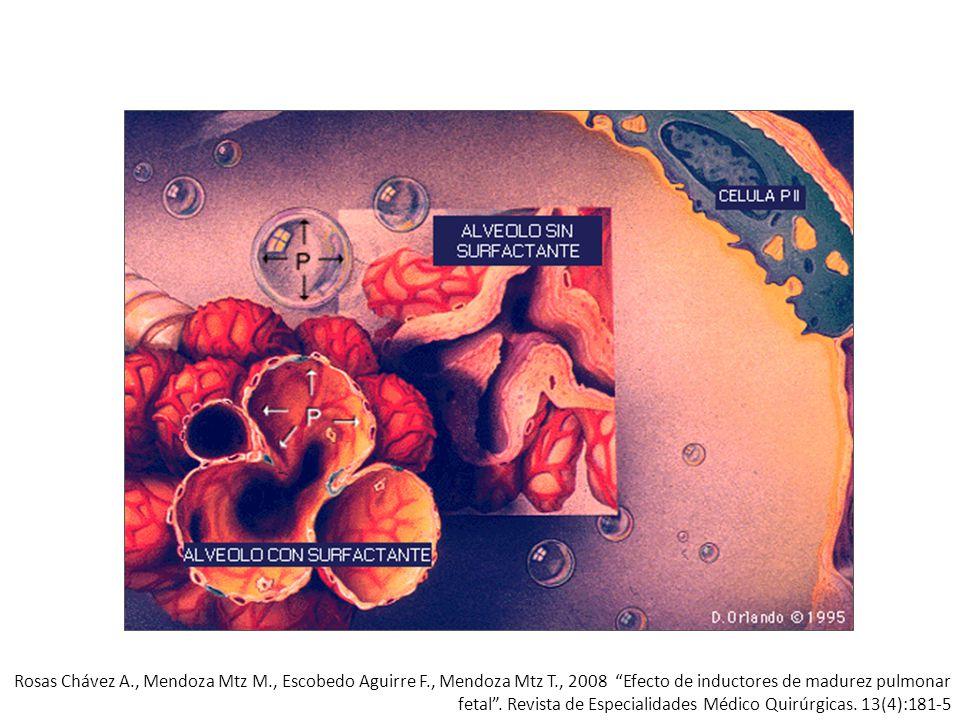 Consideracione s Población Inicio espontáneo Preeclampsia RPM Edad gestacional29 - 34 SDG Dósis e intervalo Betametasona2 – 12 – 24 Dexametasona4 – 6 – 12