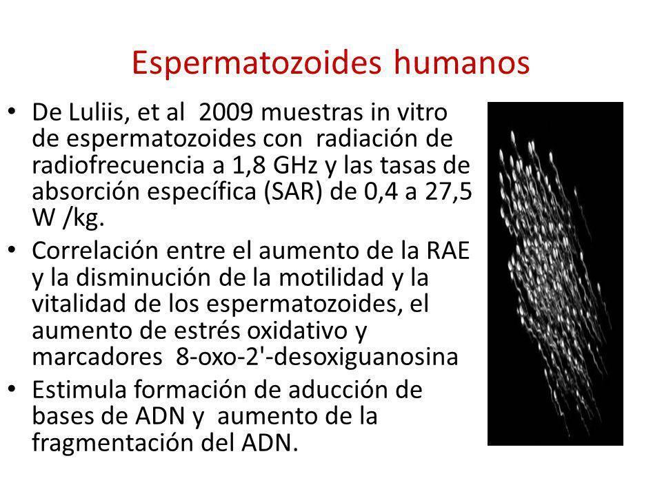 Espermatozoides humanos De Luliis, et al 2009 muestras in vitro de espermatozoides con radiación de radiofrecuencia a 1,8 GHz y las tasas de absorción
