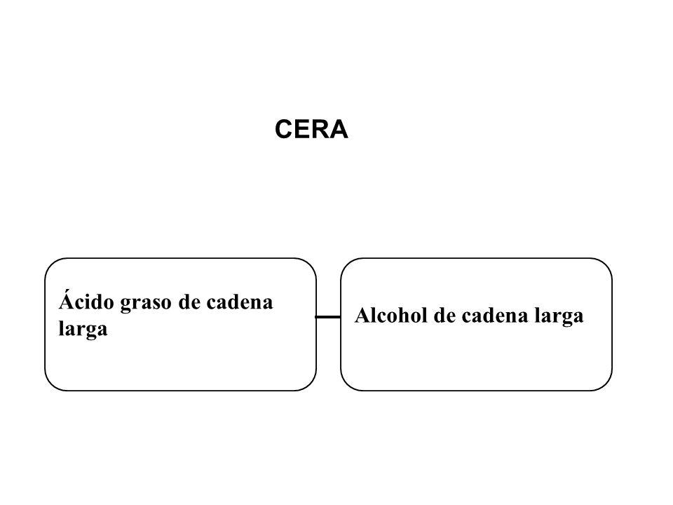 Ácido graso de cadena larga Alcohol de cadena larga CERA