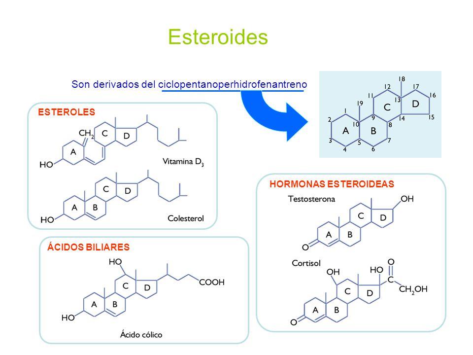 Esteroides Son derivados del ciclopentanoperhidrofenantreno ESTEROLES HORMONAS ESTEROIDEASÁCIDOS BILIARES