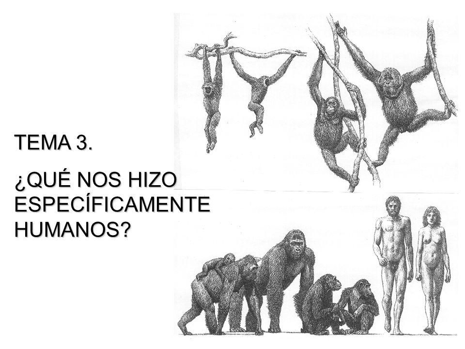 TEMA 3. ¿QUÉ NOS HIZO ESPECÍFICAMENTE HUMANOS?