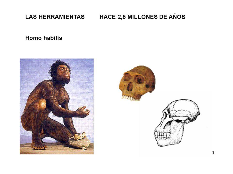 LAS HERRAMIENTAS HACE 2,5 MILLONES DE AÑOS Homo habilis