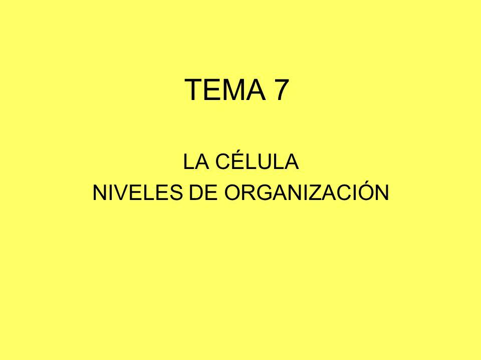 TEMA 7 LA CÉLULA NIVELES DE ORGANIZACIÓN