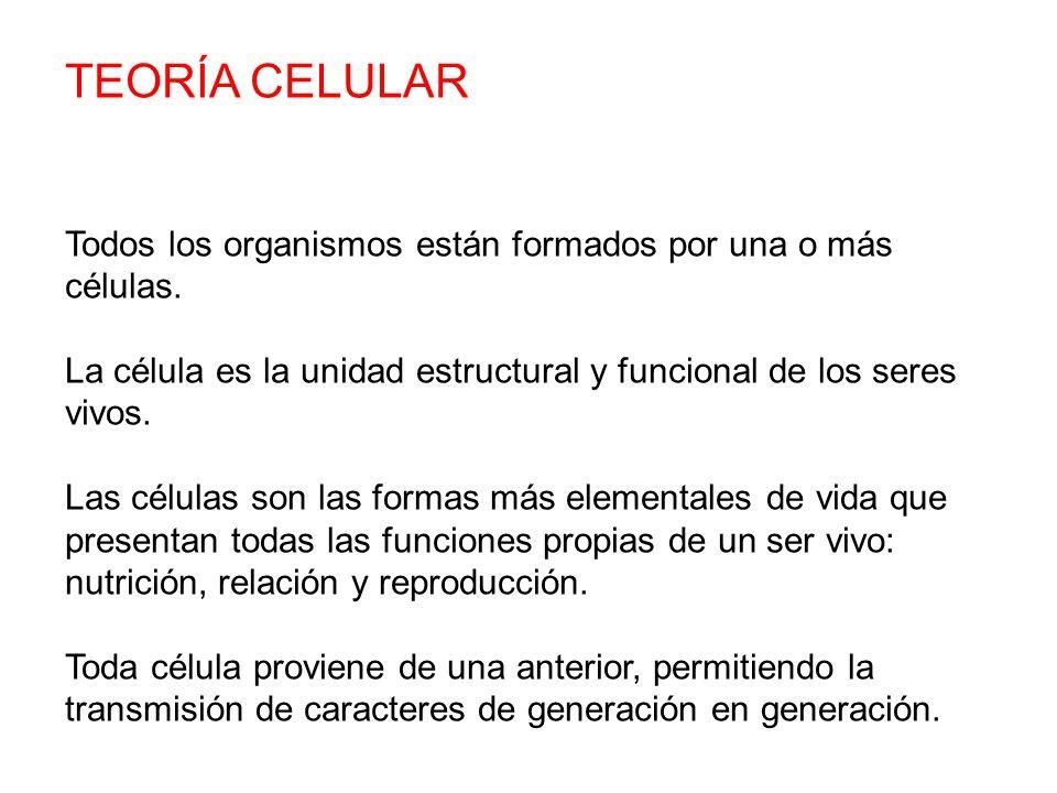 TEORÍA CELULAR Todos los organismos están formados por una o más células.