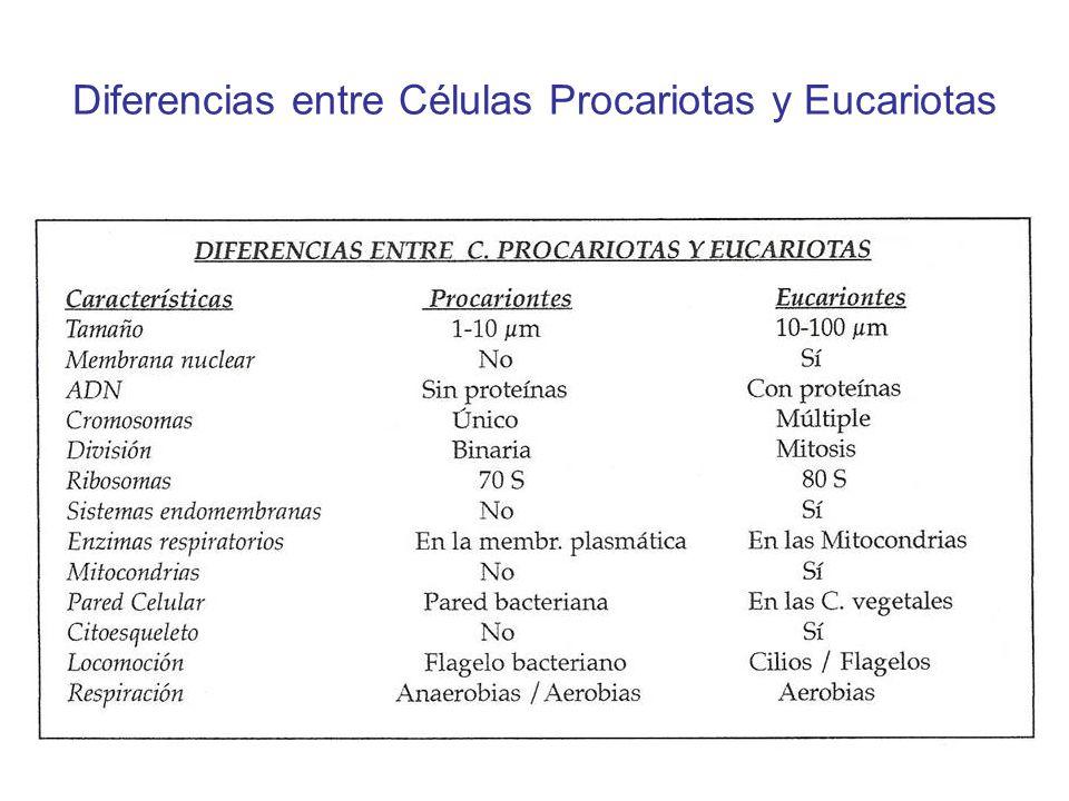 Diferencias entre Células Procariotas y Eucariotas