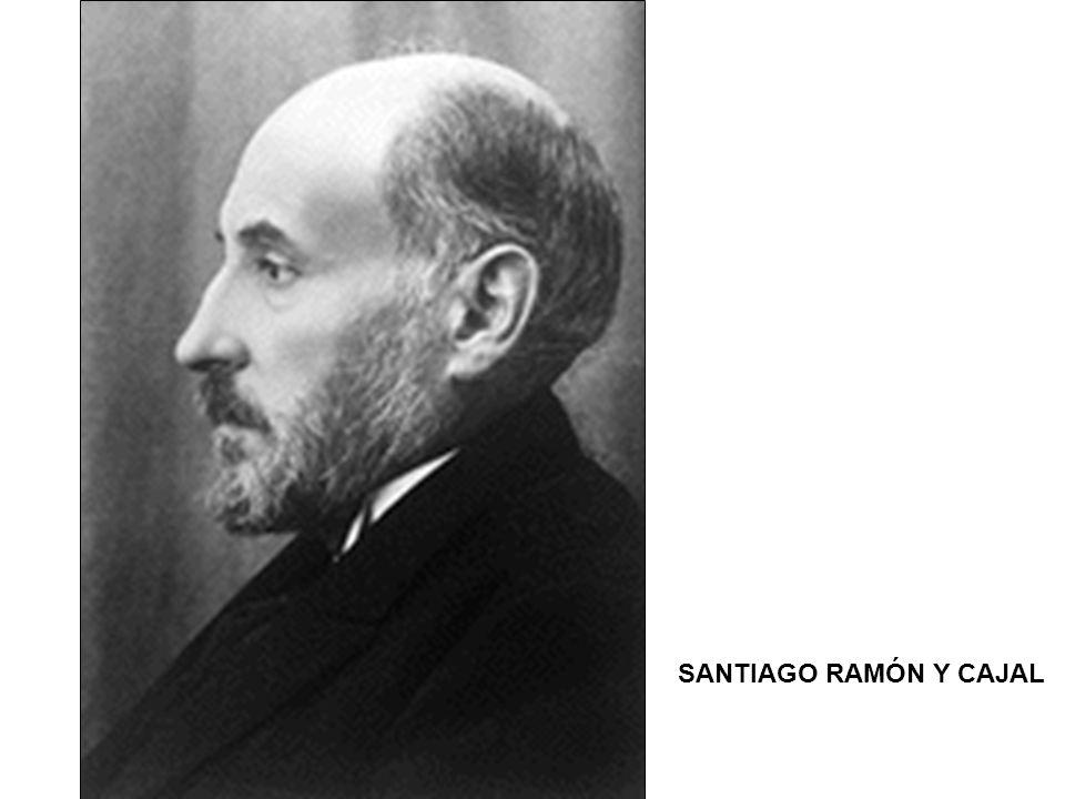 Robert Hooke Van Leeuwenhoek Schleiden Schwann Virchow Santiago Ramón y Cajal