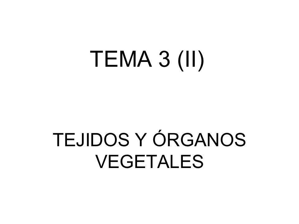 TEMA 3 (II) TEJIDOS Y ÓRGANOS VEGETALES