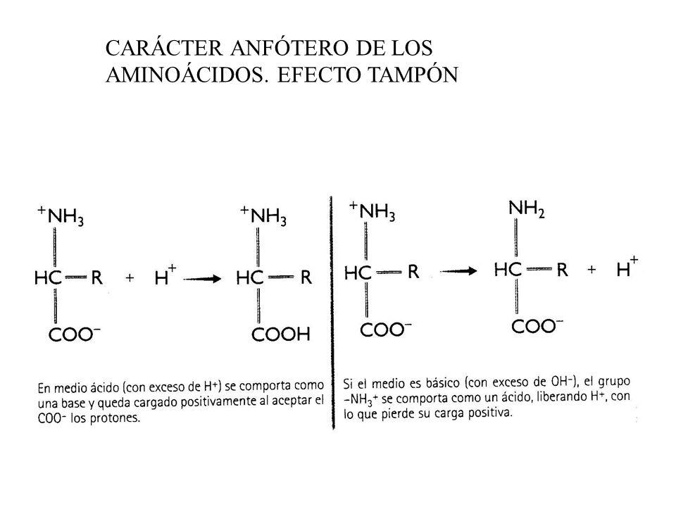 CARÁCTER ANFÓTERO DE LOS AMINOÁCIDOS. EFECTO TAMPÓN