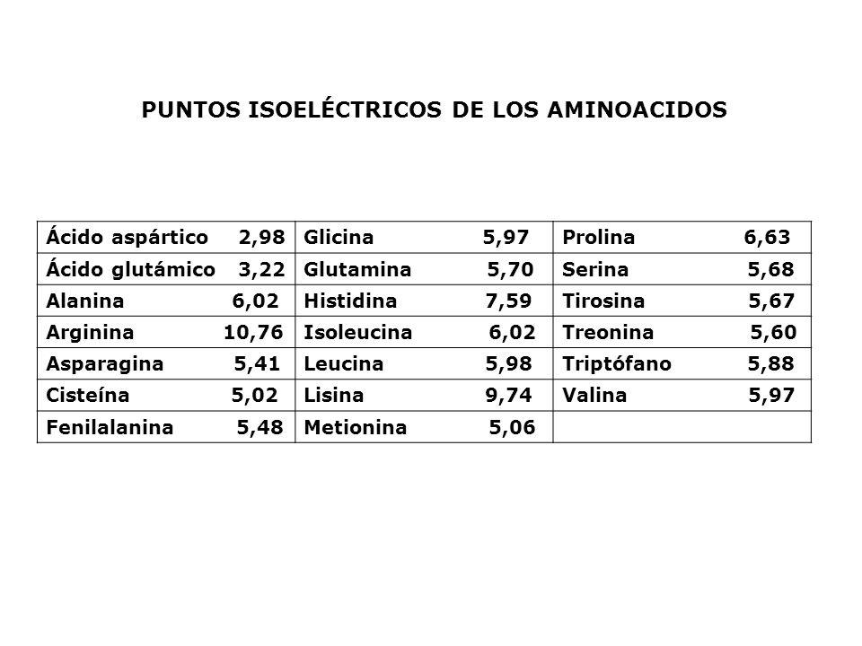 PUNTOS ISOELÉCTRICOS DE LOS AMINOACIDOS Ácido aspártico 2,98Glicina 5,97Prolina 6,63 Ácido glutámico 3,22Glutamina 5,70Serina 5,68 Alanina 6,02Histidi