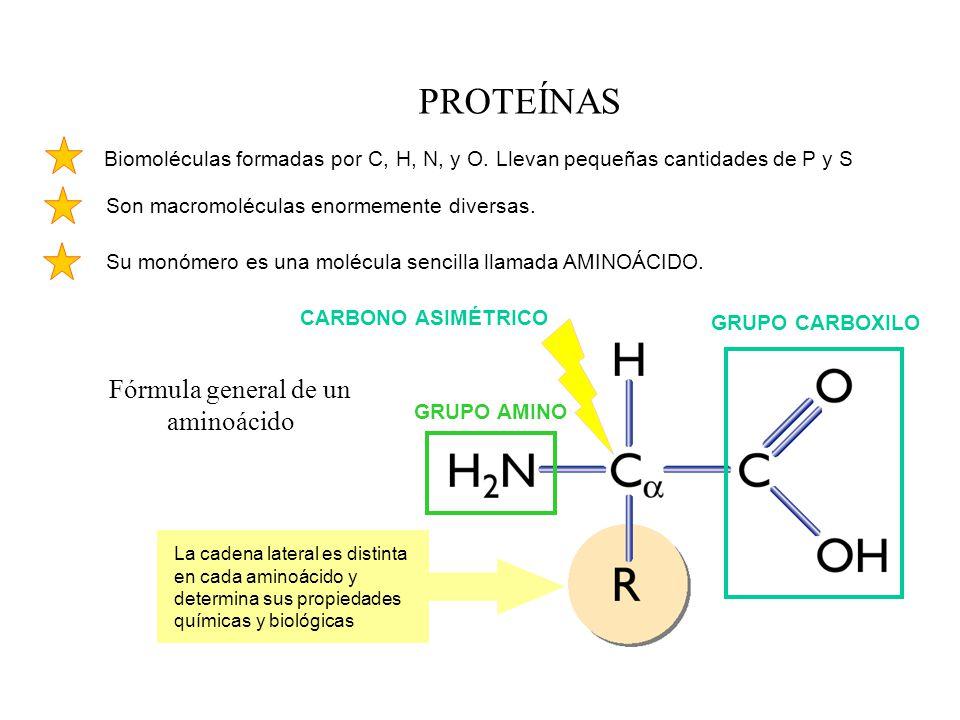 GRUPO CARBOXILO GRUPO AMINO Fórmula general de un aminoácido Biomoléculas formadas por C, H, N, y O. Llevan pequeñas cantidades de P y S Son macromolé