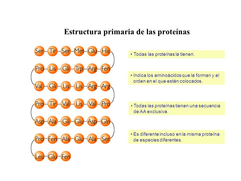 Estructura primaria de las proteínas Todas las proteínas la tienen. Indica los aminoácidos que la forman y el orden en el que están colocados. Es dife