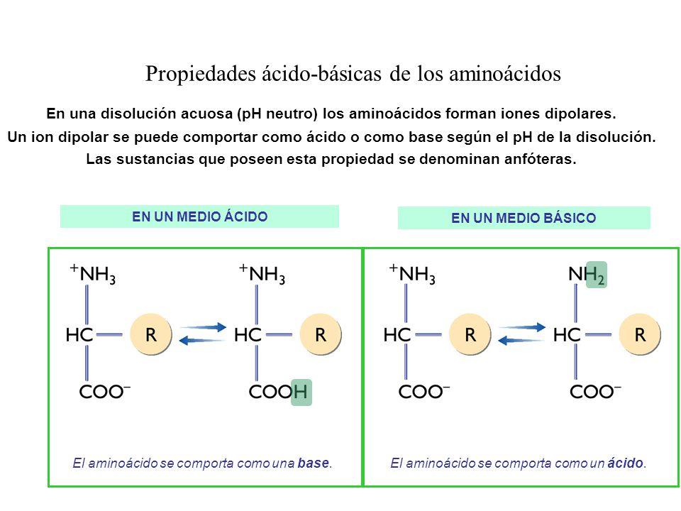 Propiedades ácido-básicas de los aminoácidos En una disolución acuosa (pH neutro) los aminoácidos forman iones dipolares. Un ion dipolar se puede comp