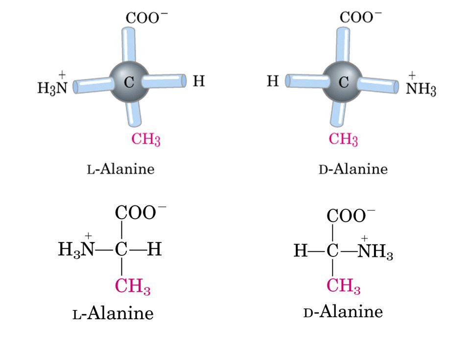 Propiedades ácido-básicas de los aminoácidos En una disolución acuosa (pH neutro) los aminoácidos forman iones dipolares.