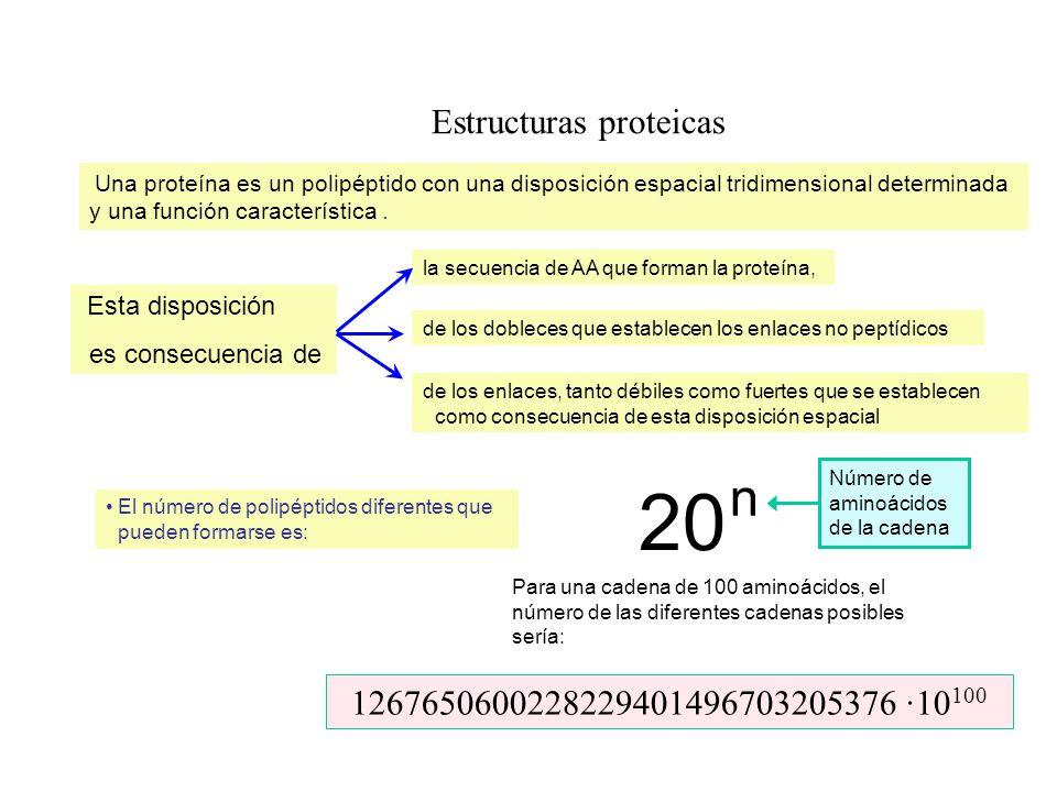 Estructuras proteicas Una proteína es un polipéptido con una disposición espacial tridimensional determinada y una función característica. la secuenci