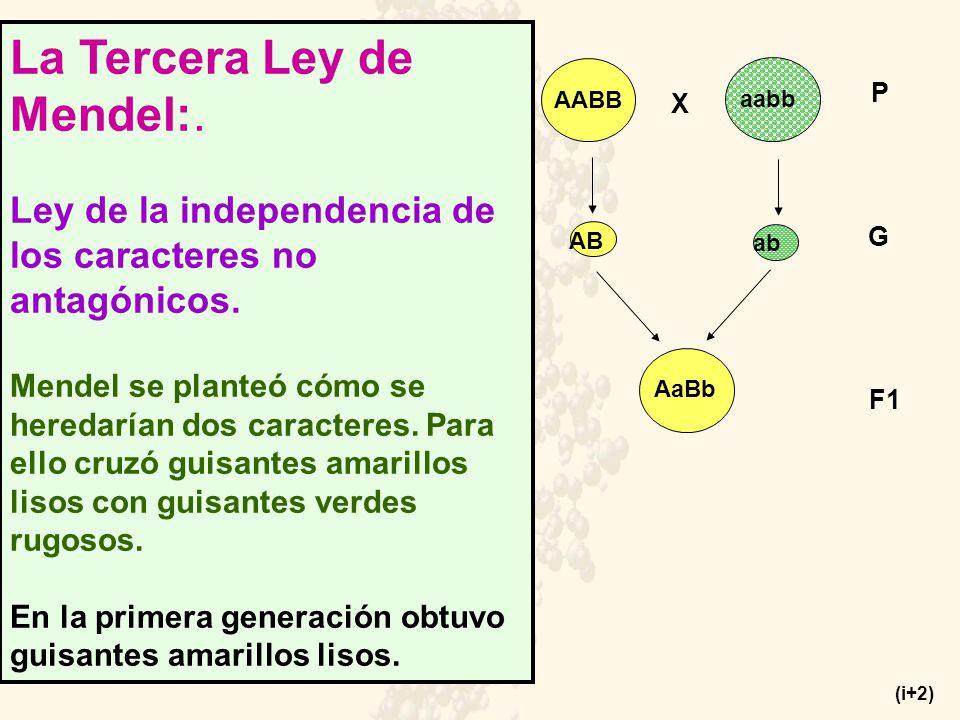 La Tercera Ley de Mendel:.Ley de la independencia de los caracteres no antagónicos.