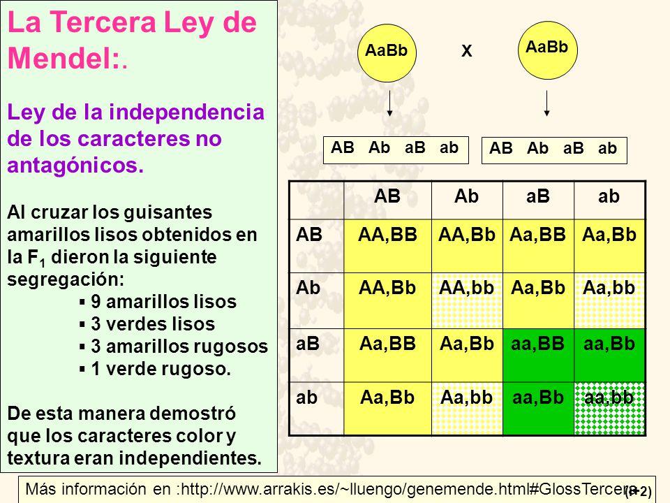 La Tercera Ley de Mendel:. Ley de la independencia de los caracteres no antagónicos. Al cruzar los guisantes amarillos lisos obtenidos en la F 1 diero