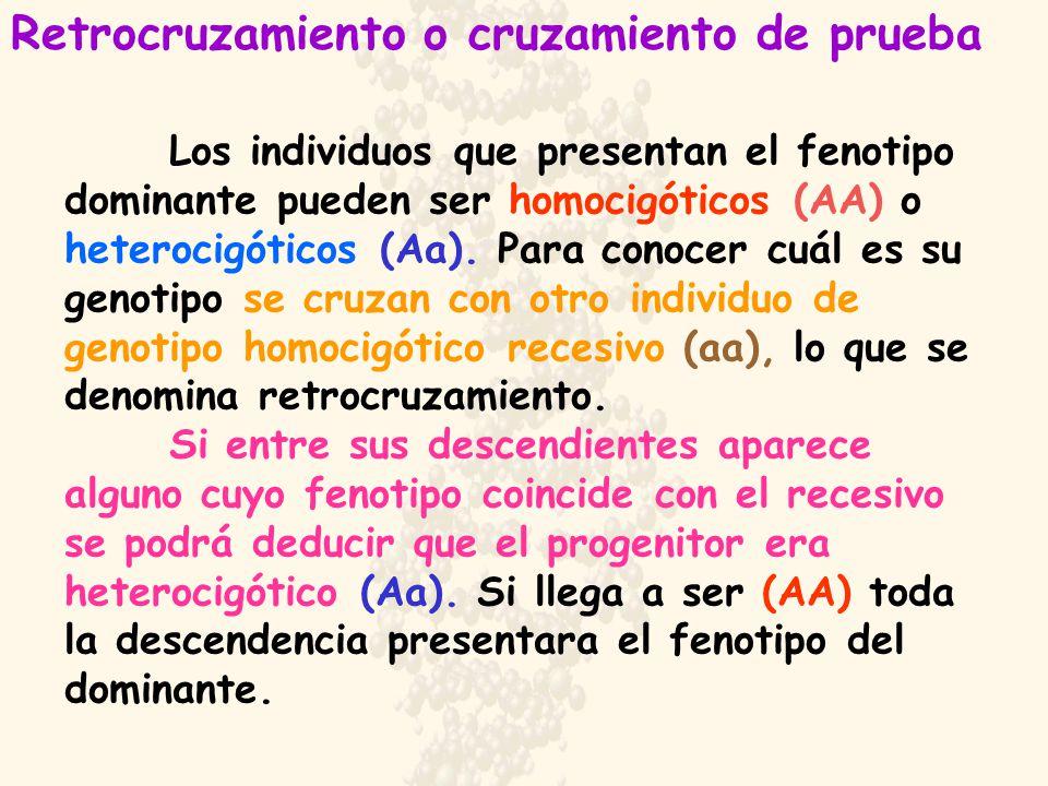 Los individuos que presentan el fenotipo dominante pueden ser homocigóticos (AA) o heterocigóticos (Aa). Para conocer cuál es su genotipo se cruzan co